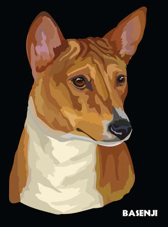 Colored portrait of Basenji isolated vector illustration on black background