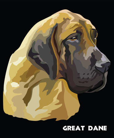 Colored portrait of Great Dane isolated vector illustration on black background