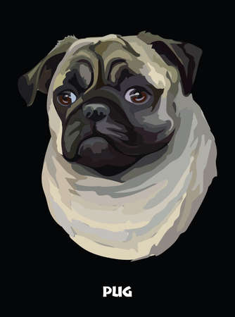 Colored portrait of Pug isolated vector illustration on black background Illustration