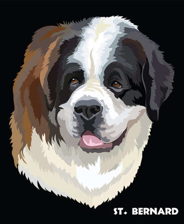 Colored portrait of St. Bernard isolated vector illustration on black background