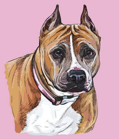 American Staffordshire Terrier vector hand drawing illustration in different color on pink background