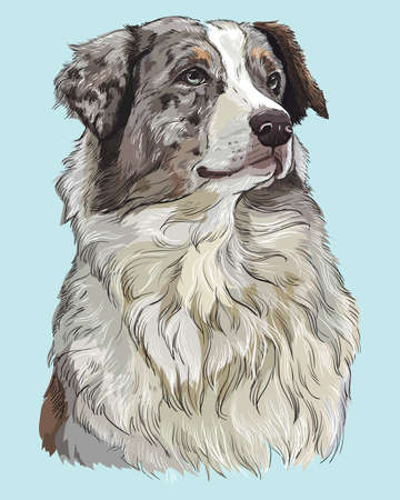 Australian shepherd vector hand drawing illustration in different color on turquoise background