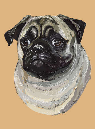 Pug vector hand drawing illustration in different color on beige background