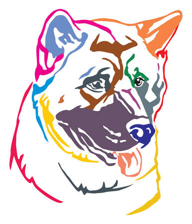 Colorful decorative portrait of dog American akita, vector illustration in different colors isolated on white background