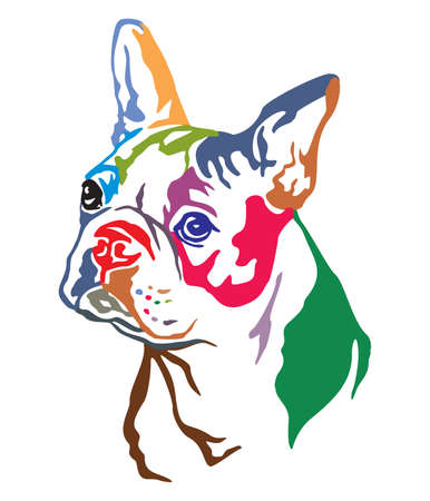 Colorful decorative portrait of dog Boston terrier, vector illustration in different colors isolated on white background