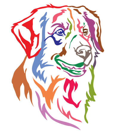 Colorful decorative portrait of dog Nova Scotia Duck Tolling Retriever, vector illustration in different colors isolated on white background