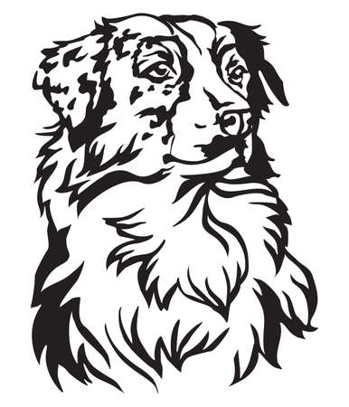 Decorative portrait of dog Australian shepherd, vector isolated illustration in black color on white background Çizim