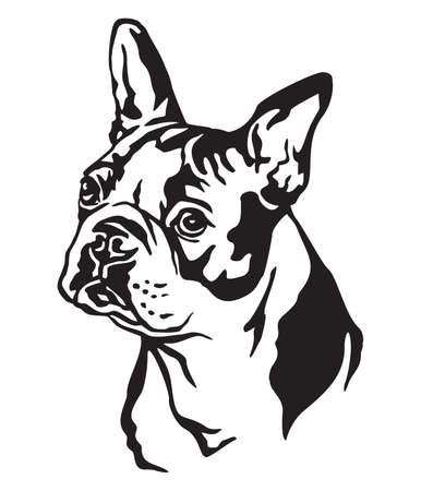 Decorative portrait of dog Boston terrier, vector isolated illustration in black color on white background