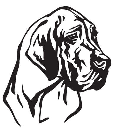 Decorative portrait of dog Great Dane, vector isolated illustration in black color on white background