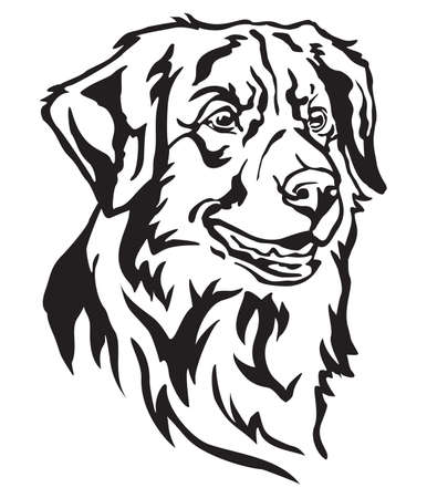 Decorative portrait of dog Nova Scotia Duck Tolling Retriever, vector isolated illustration in black color on white background Ilustração