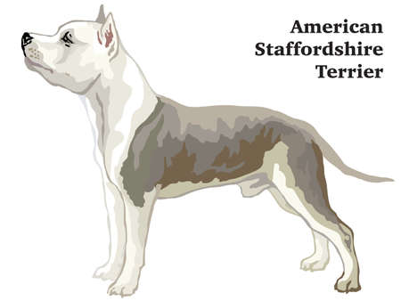 Portrait of standing in profile American Staffordshire Terrier dog, vector colorful illustration isolated on white background
