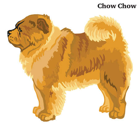 Portrait of standing in profile Chow Chow dog, vector colorful illustration isolated on white background Illusztráció