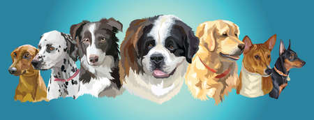 Set of colorful vector portraits of dog breeds (German Pinscher; dalmatian; Border Collie; St. Bernard; Basenji; golden retriever; Miniature Pinscher) isolated on turquoise background Иллюстрация