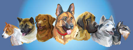 Set of colorful vector portraits of dog breeds (American Staffordshire Terrier, American akita, Nova Scotia Duck Tolling Retriever, siberian husky,german shepherd, Miniature Schnauzer) isolated on blue background