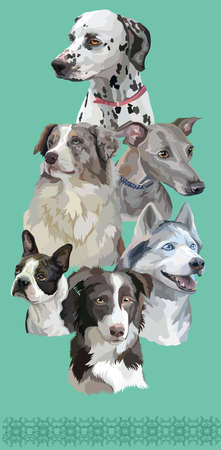 Vertical postcard with dogs of different breeds (border collie; Dalmatian, Boston terrier, siberian husky, Italian Greyhound, Australian shepherd) on green background.