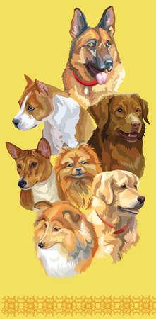 Vertical postcard with dogs of different breeds (german shepherd; golden retriever, small pomeranian, Pitbull, Nova Scotia Duck Tolling Retriever, Basenji, sheltie)on yellow background.
