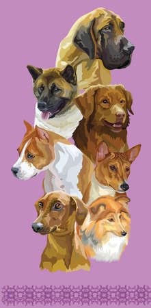 Vertical postcard with dogs of different breeds (American Staffordshire Terrier, Nova Scotia Duck Tolling Retriever, Basenj, sheltie, German Pinscher, Great Dane, American akita) on purple background. Illustration