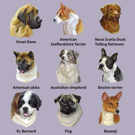 Set of colorful vector portraits of dog breeds ( American Staffordshire Terrier, Nova Scotia Duck Tolling Retrieve, Boston terrier, Australian shepherd, Great Dane, Pug) isolated on purple background Stock Illustratie