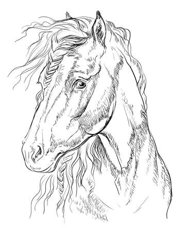 Horse portrait. Horse head in profile in monochrome colors isolated on white background. Vector hand drawing illustration Banco de Imagens - 127686887