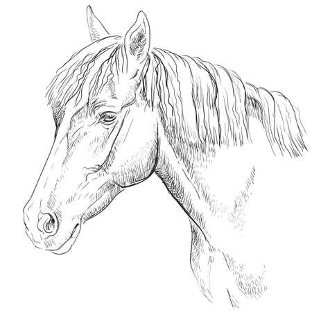 Horse portrait. Horse head in profile in monochrome color isolated on white background. Vector hand drawing illustration