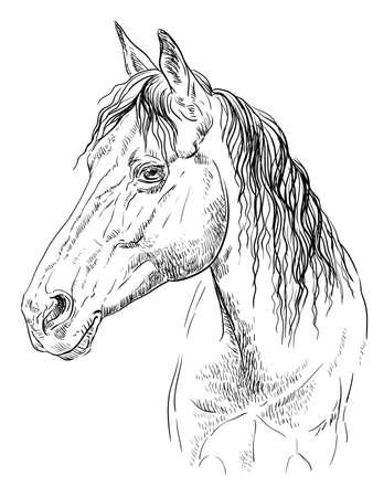 Portrait de cheval. Tête de cheval de profil en couleurs monochromes isolés sur fond blanc. Illustration de dessin de main de vecteur
