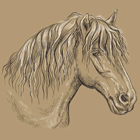 Portrait de cheval. Tête de cheval avec une longue crinière de profil en noir et blanc isolé sur fond beige. Illustration de dessin vectoriel main Vecteurs