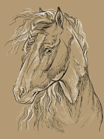 Horse portrait. Horse head with long mane in profile in black and white colors isolated on beige background. Vector hand drawing illustration