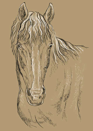 Horse portrait. Horse head with long mane in black and white colors isolated on beige background. Vector hand drawing illustration Illustration