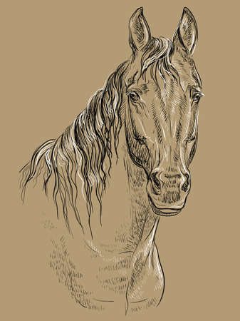 Horse portrait. Horse head with long mane in black and white colors isolated on beige background. Vector hand drawing illustration Ilustração