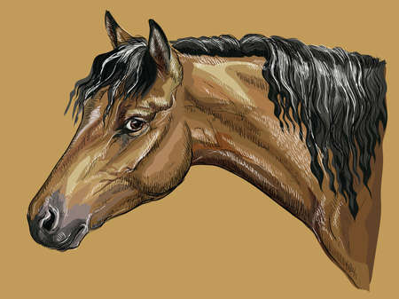 Colorful hand drawing portrait of bay Welsh Pony. Horse head with long mane in profile isolated vector hand drawing illustration on beige background Ilustração
