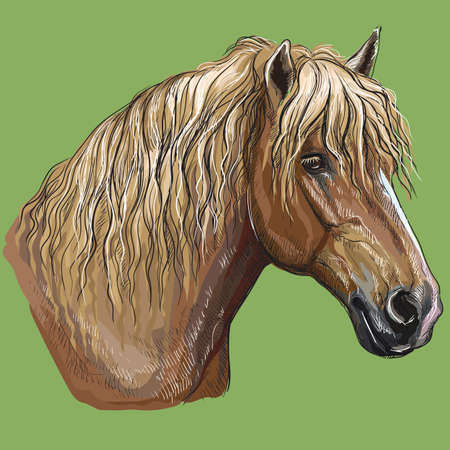 Ritratto di disegno a mano colorato del cavallo da tiro pesante russo. Testa di cavallo in profilo vettore isolato disegno a mano illustrazione su sfondo verde Vettoriali