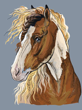 Colorful hand drawing portrait of Pinto horse. Horse head  in profile isolated vector hand drawing illustration on grey background