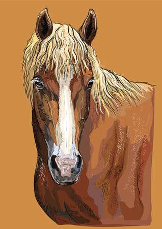 Colorido retrato de dibujo a mano alzada del caballo de tiro pesado ruso. Cabeza de caballo en el perfil aislado dibujo a mano alzada, ilustración vectorial sobre fondo beige Ilustración de vector