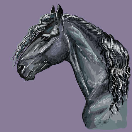 Colorful hand drawing portrait of Friesian horse. Horse head  in profile isolated vector hand drawing illustration on purple background