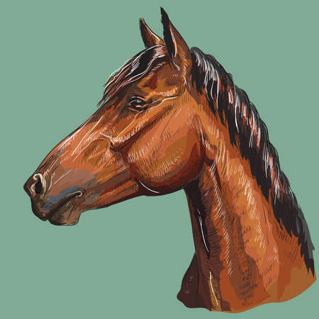 Colorful hand drawing portrait of bay horse. Horse head  in profile isolated vector hand drawing illustration on green background