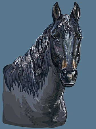 Colorful hand drawing portrait of black horse. Horse head isolated vector hand drawing illustration on dark blue background