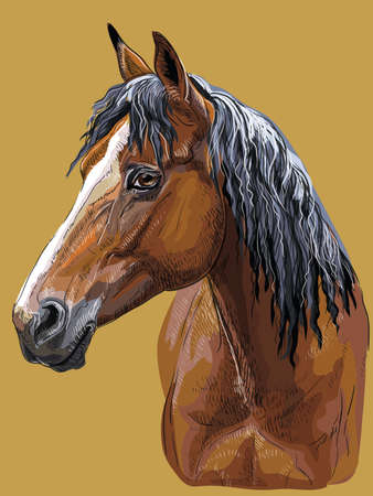 Colorful hand drawing portrait of bay horse. Horse head in profile isolated vector hand drawing illustration on mustard background