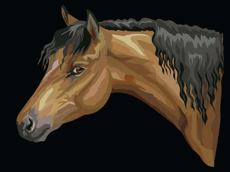 Colorful portrait of bay Welsh Pony. Horse head with long mane in profile isolated vector hand drawing illustration on black background Ilustração