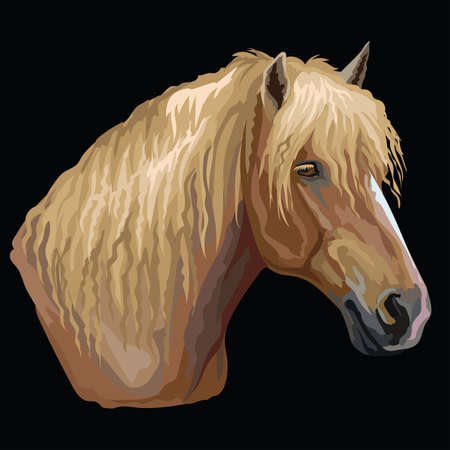 Colorful portrait of Russian Heavy Draft horse. Horse head  in profile isolated vector hand drawing illustration on black background
