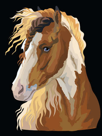 Colorful portrait of Pinto horse. Horse head in profile isolated vector hand drawing illustration on black background Çizim