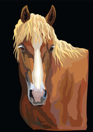 Colorful portrait of  horse. Horse head  isolated vector hand drawing illustration on black background