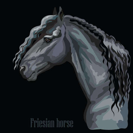 Colorful portrait of  Friesian horse. Horse head in profile isolated vector hand drawing illustration on black background