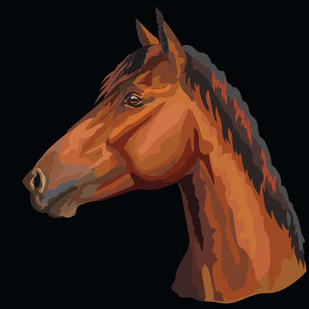 Colorful portrait of bay horse. Horse head  in profile isolated vector hand drawing illustration on black background 스톡 콘텐츠 - 119455149