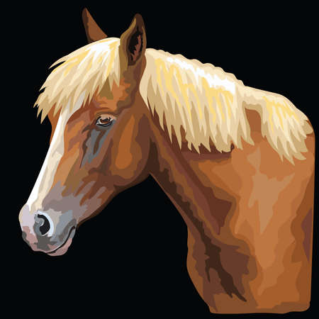 Colorful portrait of horse. Horse head  in profile isolated vector hand drawing illustration on black background