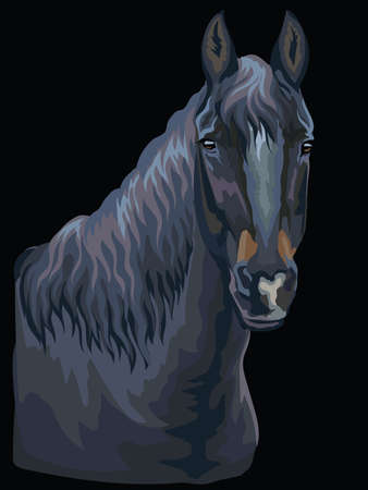 Colorful portrait of black horse. Horse head  in profile isolated vector hand drawing illustration on black background 일러스트