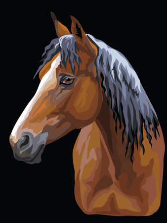 Colorful portrait of bay horse. Horse head  in profile isolated vector hand drawing illustration on black background