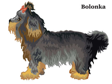 Portrait of standing in profile dog Bolonka, vector colorful illustration isolated on white background Ilustração