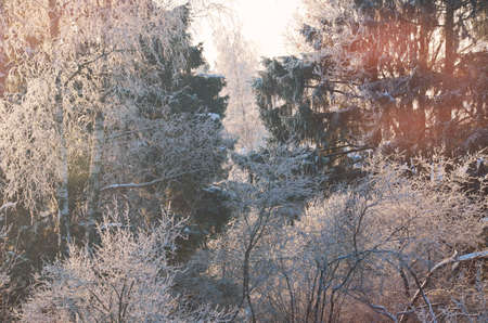Stock image. Branches of trees and bushes in rime ice. Winter sunny forest landscape.