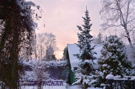 Stock image. Winter garden landscape in twilight. Branches of trees, bushes and roofs of rural houses in rime ice.