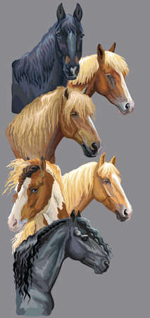 Vertical postcard with portraits of horses breeds (Russian Heavy Draft Horse; Byelorussian Harness Horse; Friesian horse, Pinto Horse) isolated on grey background. Vector colorful illustration. Illustration